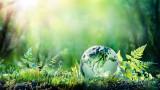 40% от растителните видове в света има риск да изчезнат