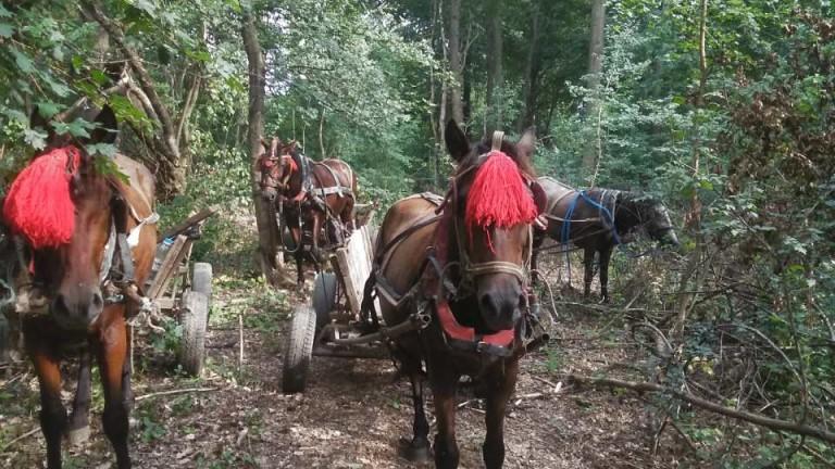 Пет коня и пет каруци са задържали горските служители от