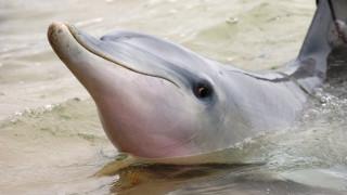 Кой е плажът на делфините