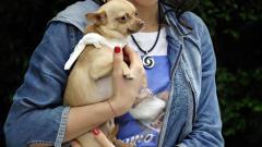 Мис България Вселена 2007 се обяви в защита на животните
