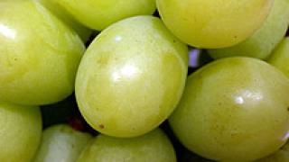 Очакват 302 хил. т. грозде за тази година