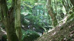 Правителството увеличава защитените горски територии