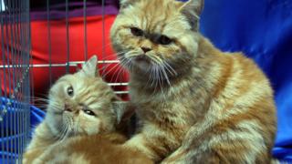 """""""Благородни"""" котки чакат да бъдат разгледани"""