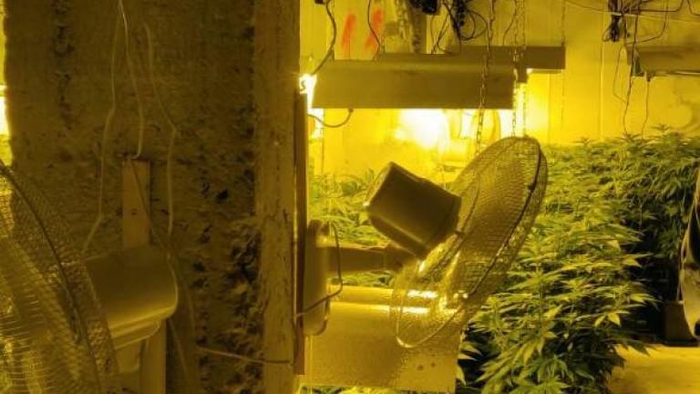 Разкрита е наркооранжерия в сградата на бившия стъкларски завод в