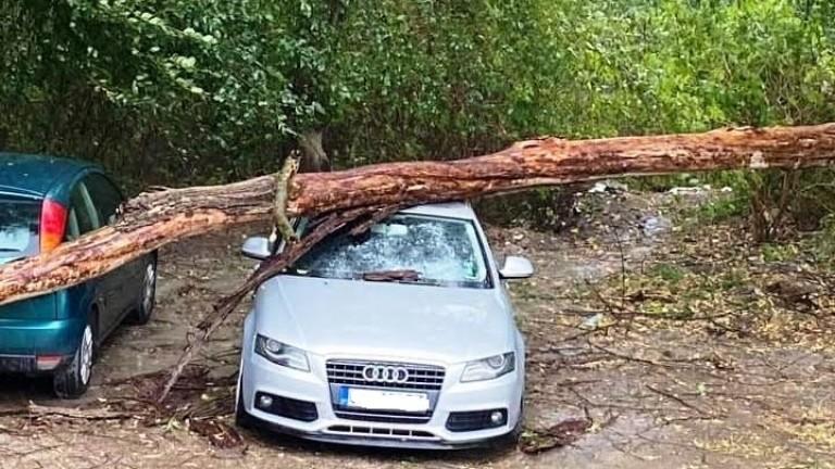 Кратка, но силна буря разкъса електропроводи и повали дървета тази