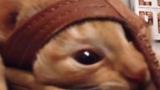 Котка се заклещи в джапанка (ВИДЕО)