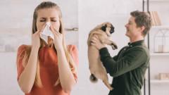 Как се случват алергичните реакции