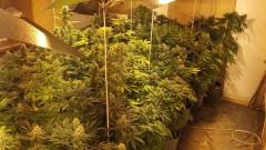 Разкриха наркооранжерия в мазе във Велико Търново