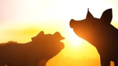 Първи случай на чума по свинете в Благоевградско
