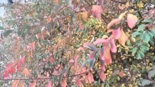 Пролет през ноември, на места дъждове с гръмотевици