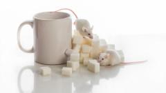 За първи път учени излекуваха диабет в мишки