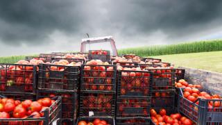 Ръстът в селското стопанство се дължи изцяло на цените