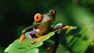 Откриха нови животински видове в Папуа-Нова Гвинея