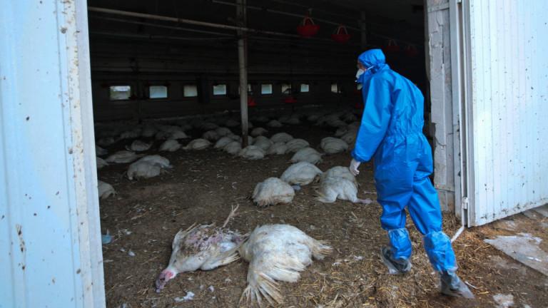 Рискът от разпространение от човек на човек на щама H5N8