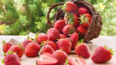 Компании в САЩ готвят производство на генно редактирани ягоди