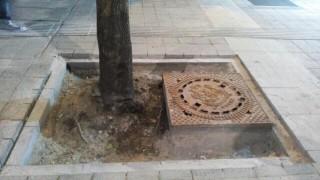 """Строители се опитват да засадят обратно изкоренени дървета по """"Графа"""""""