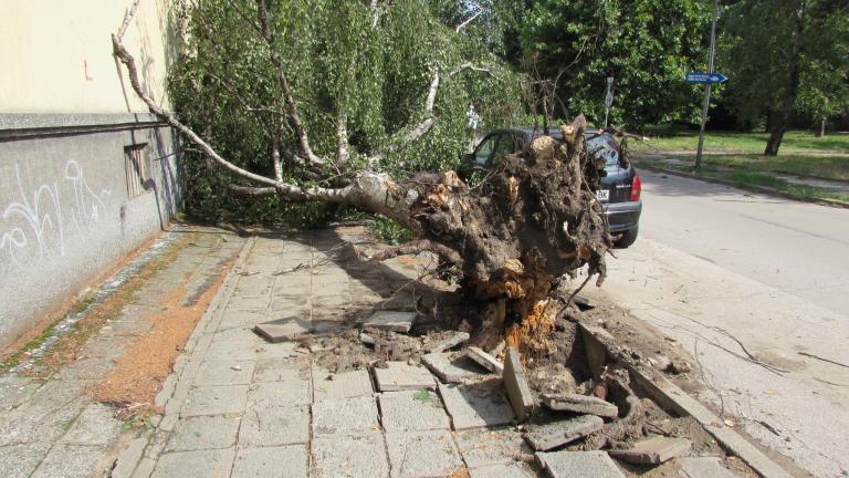 Голямо дърво падна в градската градина в Харманли