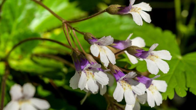 Седем уникални цветя в България
