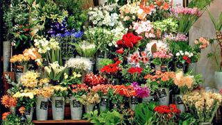 Венец от 20 000 цветя изплетоха на остров Крит