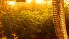 Разбиха оранжерия за марихуана в Старозагорско