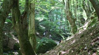 Призовават фермерите да превръщат в гори неизползваните земи