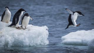 25% от Антарктида остават без лед до 2100 г.