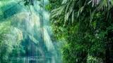 Чудовищни загуби на тропически гори за втора поредна година