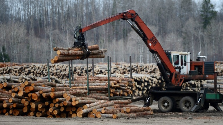 За 150 млн. лева е нелегалният дърводобив у нас през 2019 г.