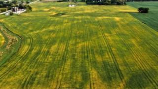 Тръмп обеща помощ за авиацията и фермерите
