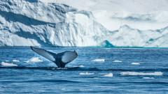 Рекордни темпове на топене на ледовете на планетата