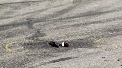 """Стрелба в столичния квартал """"Надежда"""""""