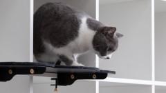 Ново хитро изобретение за котки