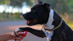Кучета на дистанционно ще спасяват хора при бедствени положения