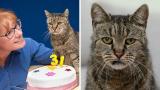 Най-старата котка в света навърши 31 години