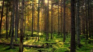 IKEA е купила 1,2 милиона декара гори в прибалтийските страни