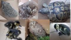 Еколози спасиха 9 животни от защитени видове в Пловдив