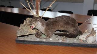 Иззеха препарирани защитени животни от заведения след селфита