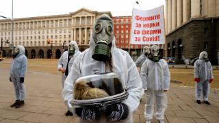 Екоактивисти на протест срещу фермите за норки