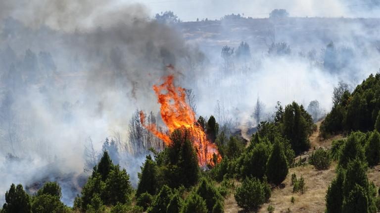 Краварят, причинил мащабния пожар в Кресненското дефиле през лятото на