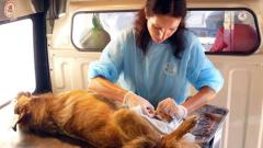 Кастрират бездомните животни в Златоград