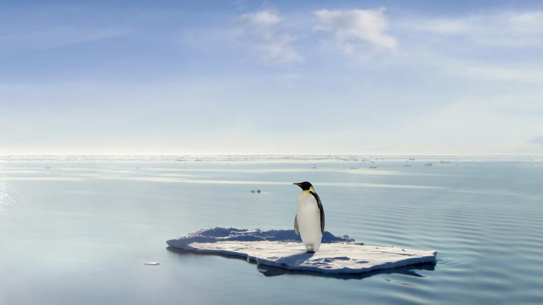 Втората най-голяма колония от пингвини е без хабитат