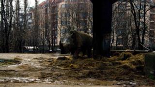 Безпроблемният зоопарк
