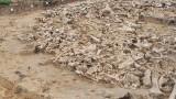 Костенки 11, мамутите и странните кръгове от кости в Русия