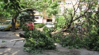 Паднали клони след буря в столицата