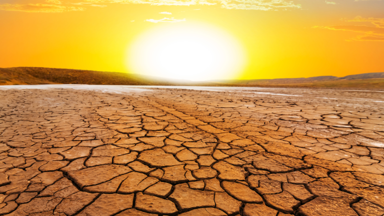Сушата унищожава храна, достатъчна за изхранването на повече от 80 млн. души
