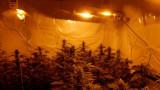 Арестуваха четирима в Сливен, произвеждали марихуана