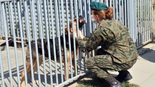 Полша планира пенсия за кучетата и конете на държавна служба