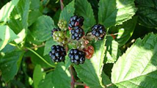 Българските билки са по-лековити от вносните