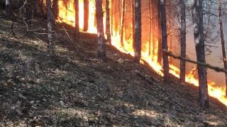 Нов пожар в Хасковско застрашава борова гора