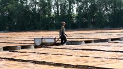 """Сушата в Сирия поставя в опасност """"годината на пшеницата"""" на Асад"""